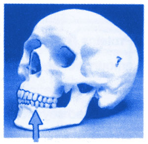 Skull of a Human